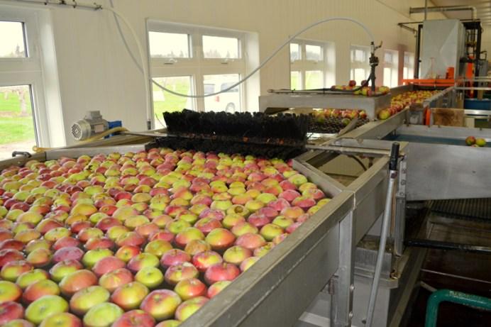 De 1,5 à 2 millions de livres de pommes sont cueillies chaque année au verger. - Acadie Nouvelle: Simon Delattre