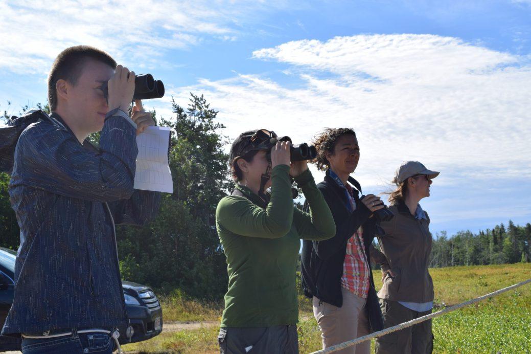 Des biologistes et des bénévoles ont procédé, mardi matin, au comptage annuel des courlis corlieu dans la Péninsule acadienne. - Acadie Nouvelle: Vincent Pichard