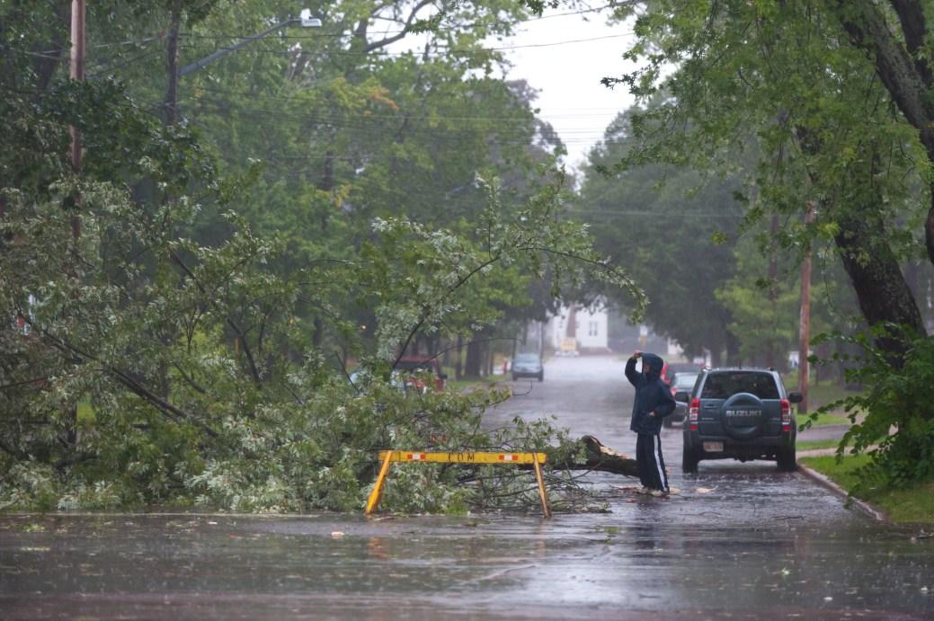 Un homme regarde un arbre tombé sur la rue Cameron, à Moncton, lors de la tempête Dorian. - La Presse canadienne: Marc Grandmaison