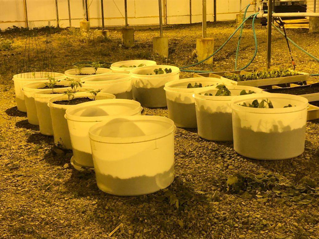 Serres Max Produce abrite 18 serres réparties dans des installations d'une superficie de production de plus de 68 000 pieds carrés. - Acadie Nouvelle: Sébastien Lachance