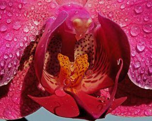 El corazón de la orquidea - Irene Sanz
