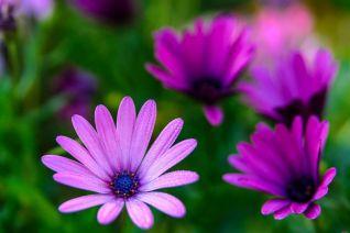 Flowers - Tomas Cano