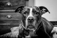 Quien tiene un perro, tiene un tesoro - Álvaro Rosa