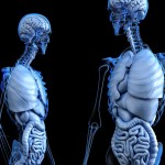 La dieta chetogenica può danneggiare il fegato?