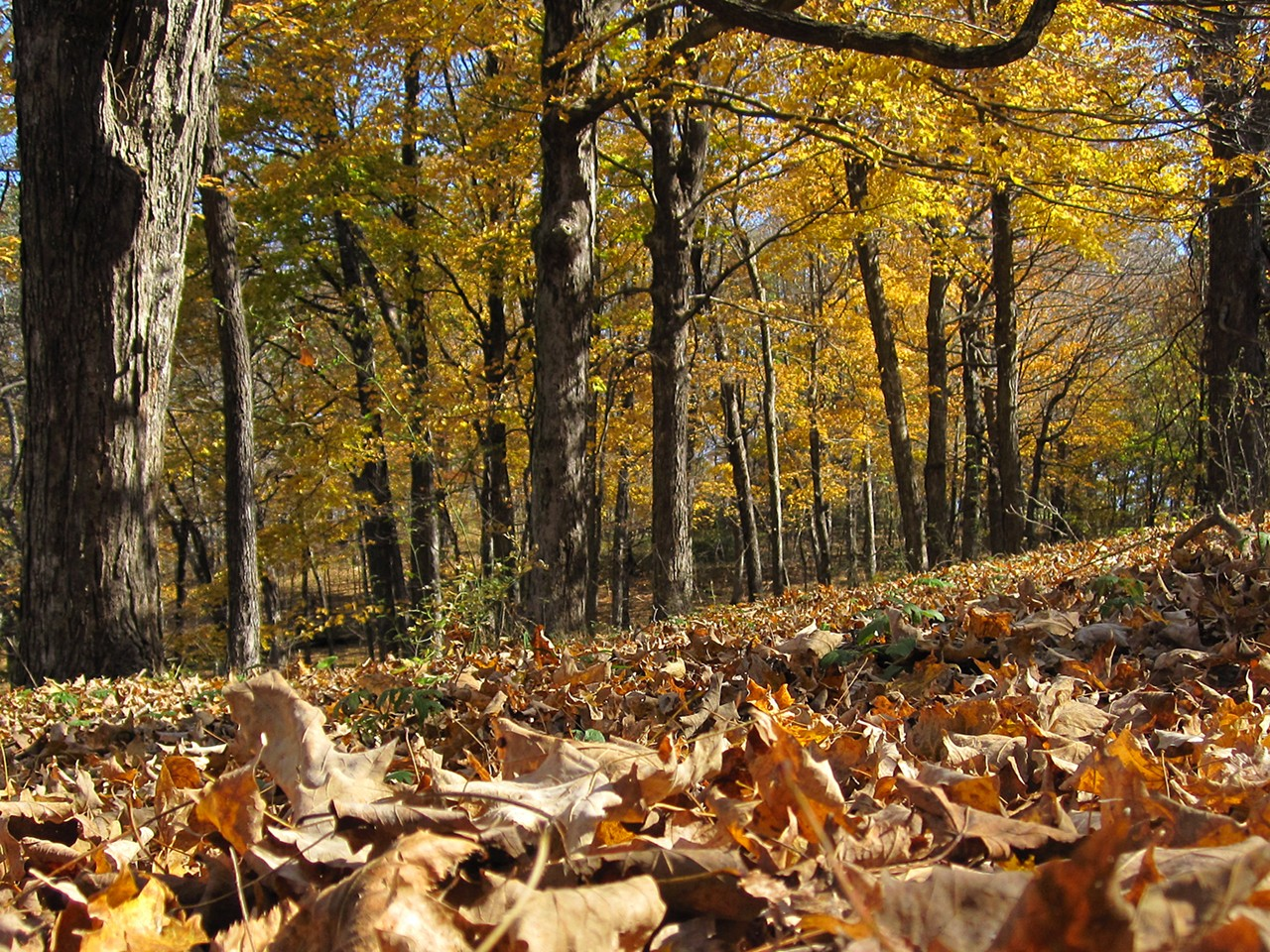 Creative Fall Wallpaper A Fall Adventure In The Wisconsin Woods Acceity