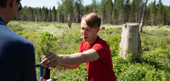 Kogukonnaprogrammi raames on istutamiseks kogutud 13 470 puud