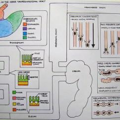 Horse Gi Diagram Cat 5 Wiring Using Drawing As A Way Of Understanding University Liverpool Charlotte Mccann C