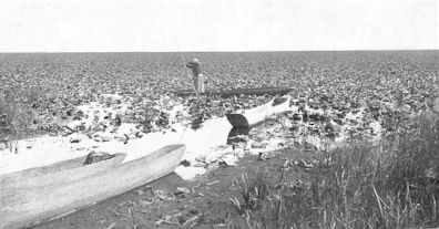 Harvesting Wokas