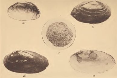Freshwater mussel shells used for scraping pottery; c, Powdered mussel shell mixed with clay for making pottery