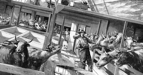 cattle-ww1