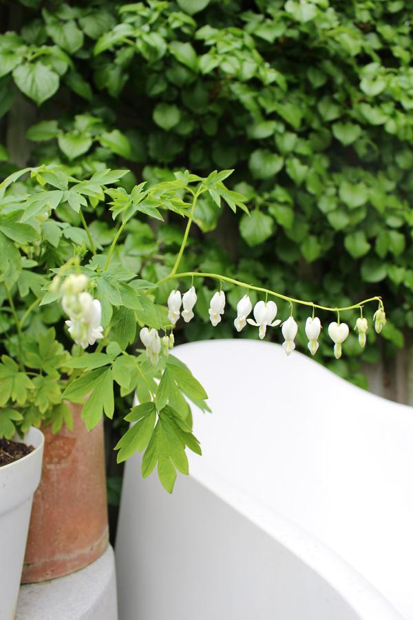photography - garden bleading heart - Sandra Meier - Accessorize your Home