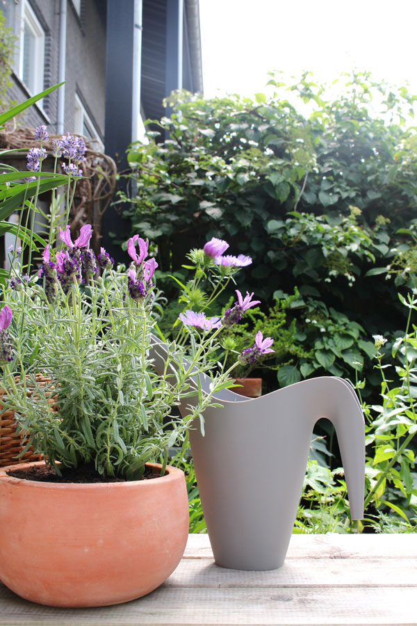 Lavendel in een terracotta pot in de tuin van Accessorize your Home