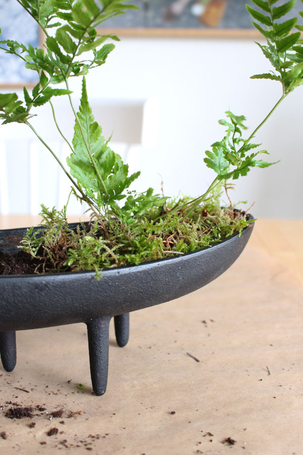 DIY van een varen stekje een gietijzeren bloempot op pootjes en mos - via Accessorize your Home