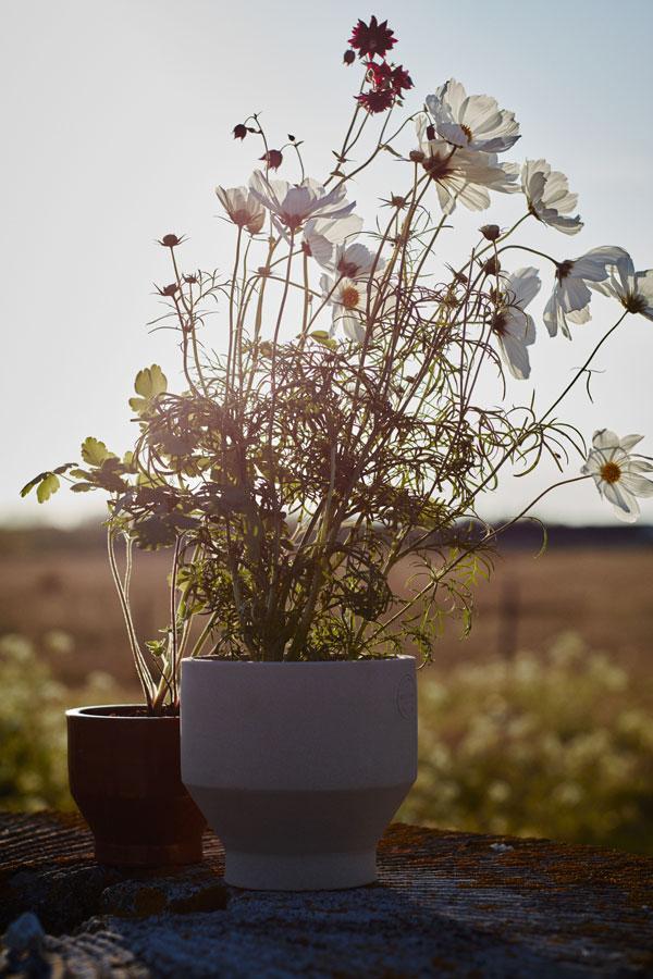 Lichtgrijze Edge bloempot gevuld met witte Cosmea - via Accessorize your Home