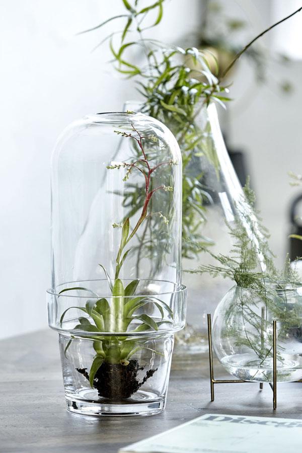 Glazen vazen en kweekkas met plantenstekjes op water van House Doctor - via Accessorize your Home