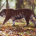 ये है भारत के टॉप 7 नेशनल पार्क |Top 7 National Parks of India