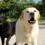 Phoenix Dog Barking Laws and Owner Tips