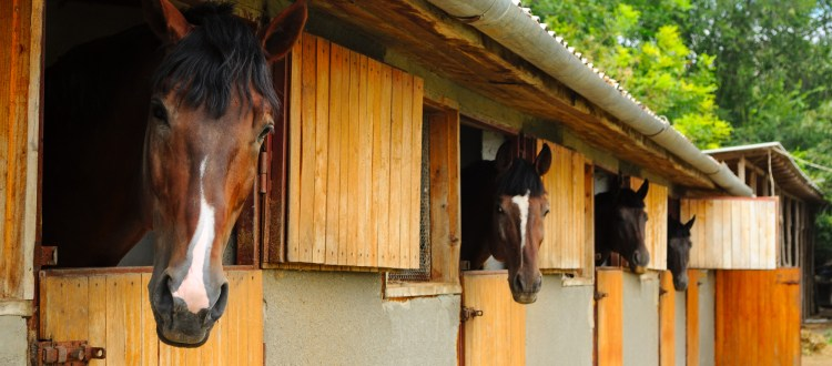 Do You Have the Right Insurance Coverage for Your Stable?