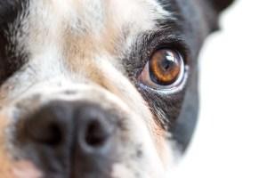 dog bite law firm