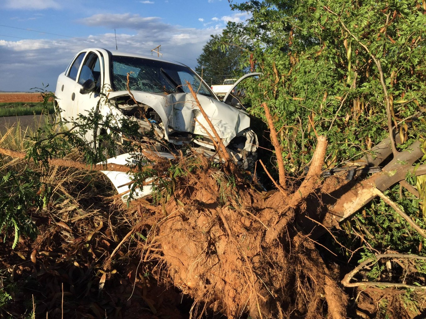 Scene from fatal crash into tree on Jagersfontein road