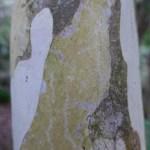 kerikeri accommodation tree trunks