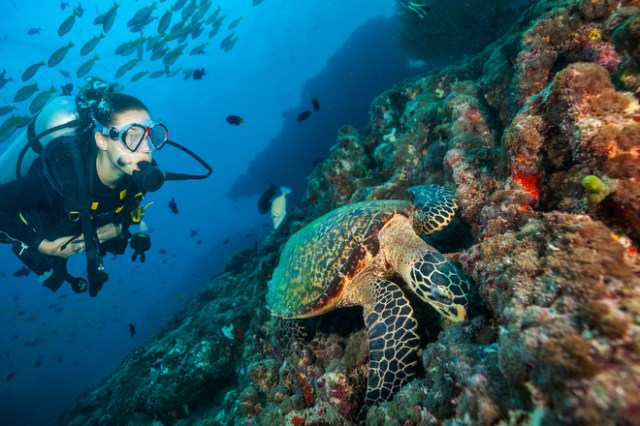 Image result for the maldives diving