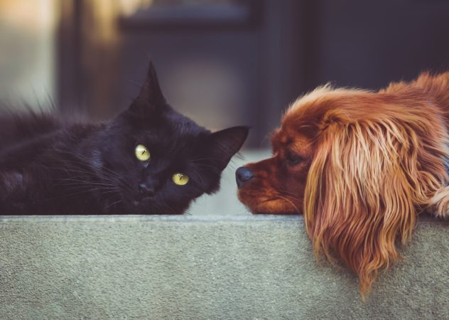 puppy and kitten training