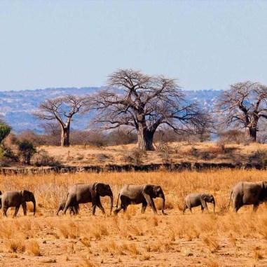 Tour-tanzania