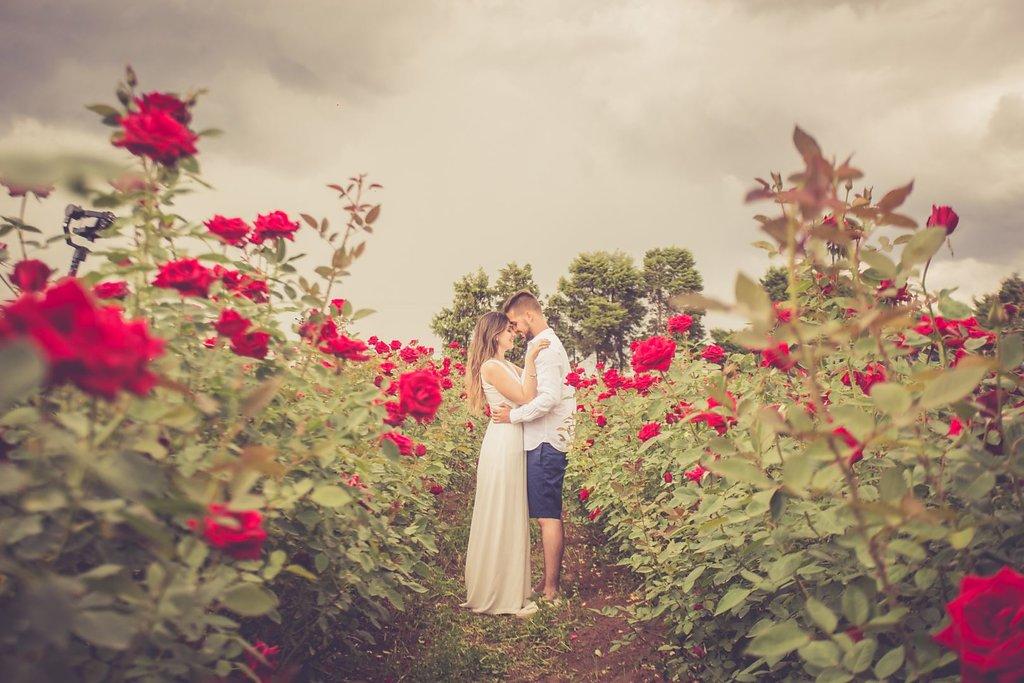 Pré-wedding em Holambra