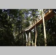 treetopwalk_4