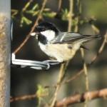 bird- Protected Species