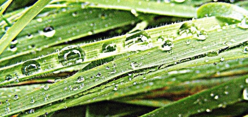 grass identification course