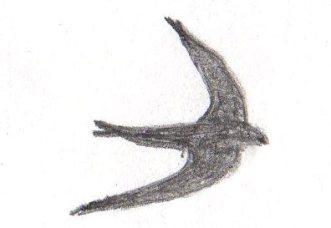 Swift Sketch South Wales