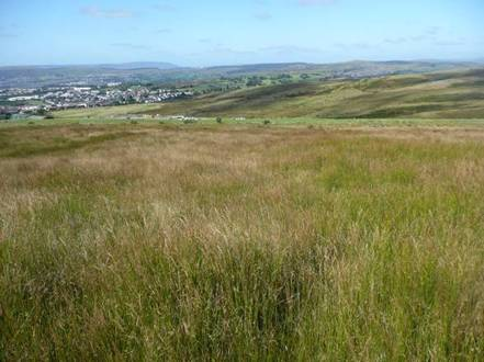 moorland survey
