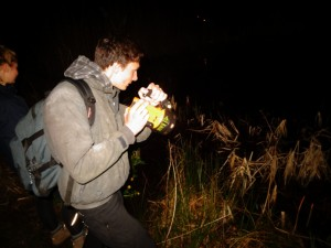 newt torching survey