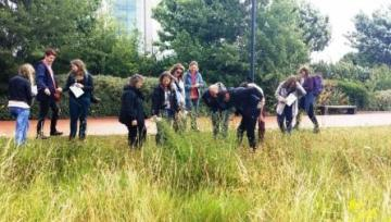 Grass identification course end