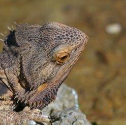 Reptile Survey