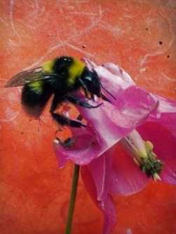 Bees foraging