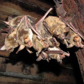 Bat Survey Ledbury