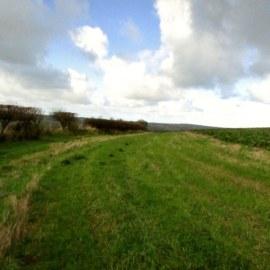 Barn Owl Survey Somerset