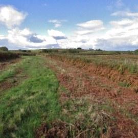 Reptile Survey Monmouthshire