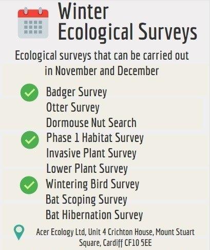 Winter Ecology Surveys