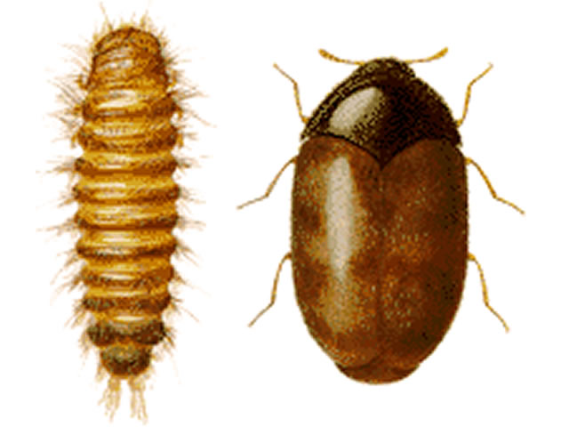 EXOTIC PESTS  Resources  Agriculture  Weights