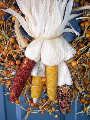 North American Corn by Janshotgun (Jan)
