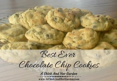 Your family will thank you for these gooey chocolate chip cookies!