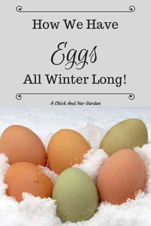 Check out how they keep in eggs through the winter months!