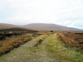 Bog road in the winter