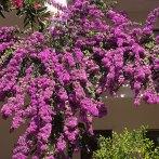 Blumenmeeer