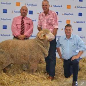 Merino rams sold in Canberra