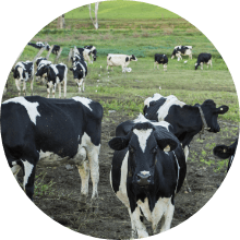 Dairy Farm Insurance image
